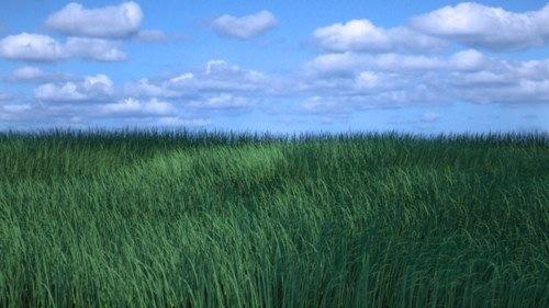 grass-Blender-25.jpg