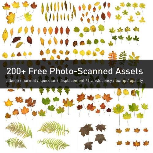 leaf-assets_500px